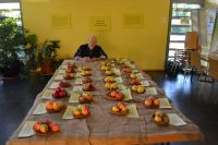 b2_Vorbereitung_Apfelsortenpräsentation_gs