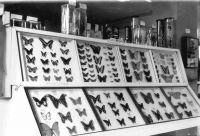 22_Schmetterlinge_aus_dem_Ausland